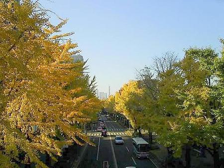 081128-山下公園通り (24)