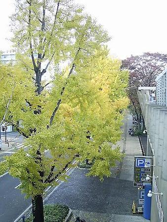 081128-山下公園通り (19)