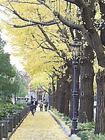 081128-山下公園通り (9)