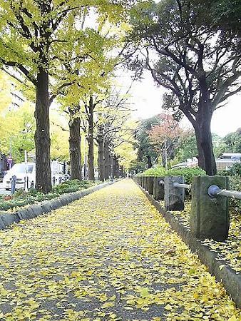 081128-山下公園通り (7)