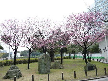 090401-MM21の桜 (7)