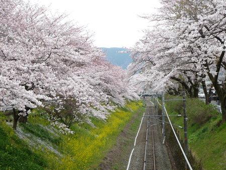 090405-御殿場線桜並木 (3)