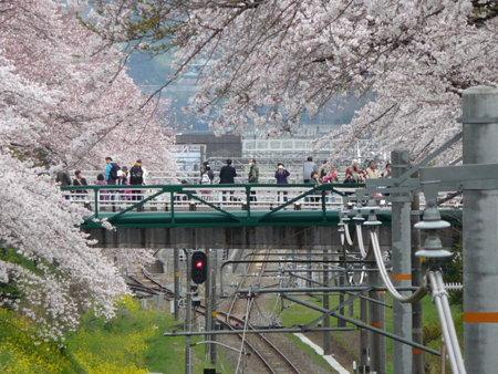 090405-御殿場線桜並木 (9)