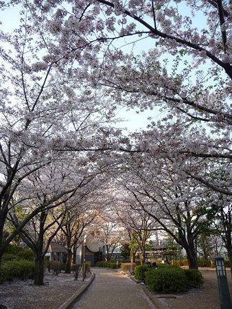 090409-川口駅の桜 (6)