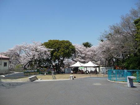 090409-野毛山動物園の桜 (2)