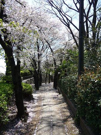 090409-野毛山公園の桜