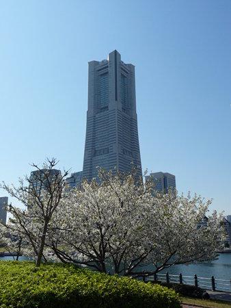 090409-MM21 ランドマークタワーと桜 (19)