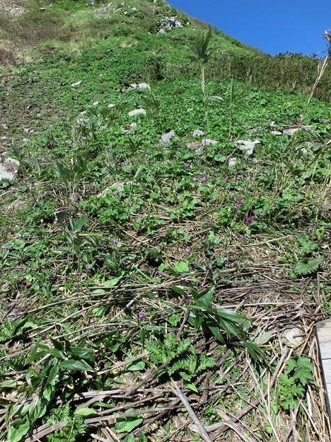 CIMG2735お花畑はこれからが本番
