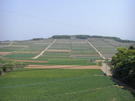区画整理された段々畑