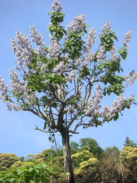 写真: 何の木だ?やたら目立ってた