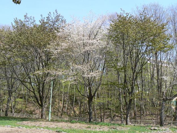 厚別区青葉中央公園P1010871