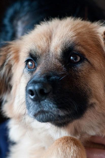 Photos: 愛犬ジョブ