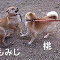 写真: もみじ_10421