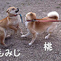 Photos: もみじ_10421