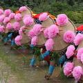写真: 後楽園お田植え祭り2