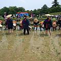 写真: 後楽園お田植え祭り7