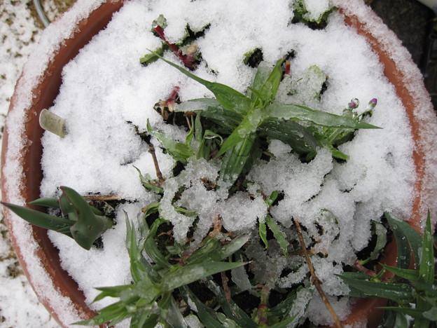 IMG_1704-雪の中