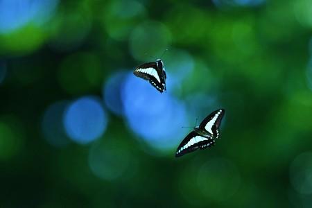 幻想飛翔。