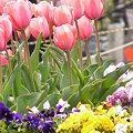 写真: 2009_0329_141851-P1020109
