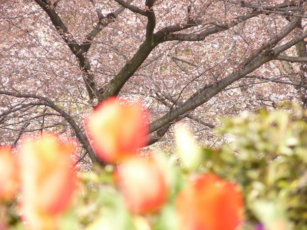 写真: 2009_0329_143339-P1020123