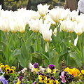 写真: 2009_0329_142207-P1020112
