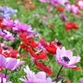 写真: 2009_0416_125358-P1020380