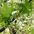 写真: 2009_0416_110540-P1020337