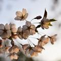 Photos: 2014-05-02