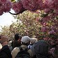 3.「今年の花」に群がる人々。。