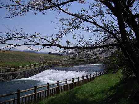殿様林の桜2s