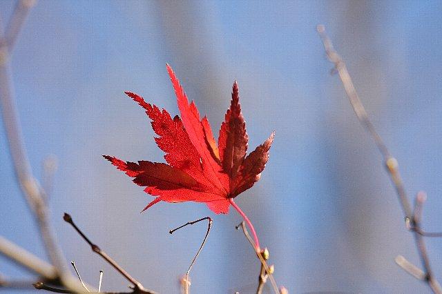 2008.12.06 こども自然公園 紅葉