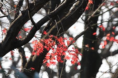 2008.12.20 山手 紅葉