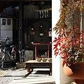 Photos: 2009.02.07 川越 やまわ蔵部 ナンテンの先