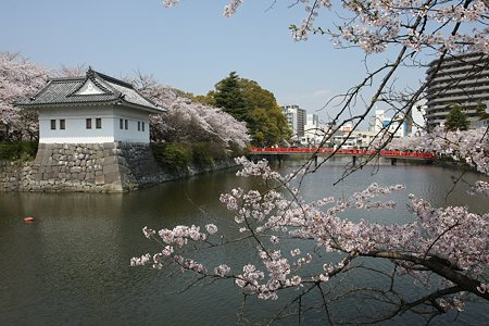 2009.04.07 小田原城 染井吉野-1