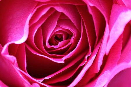 2009.05.09 日比谷公園 薔薇