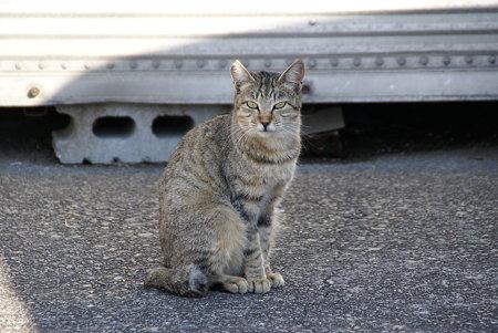 「いらっしゃいませ~ 綺麗に撮ってね・・」 漁港で愛されてる猫・・6