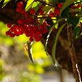 写真: 華やかな赤・・