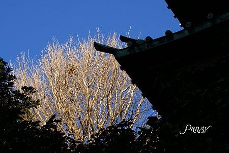 青空と・・輝く木と・・