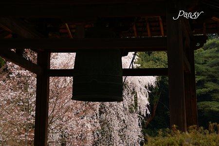 鐘楼と桜・・京都醍醐寺にて23