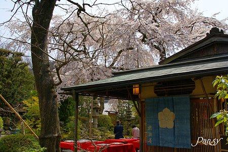 京都 桜さんぽ~11