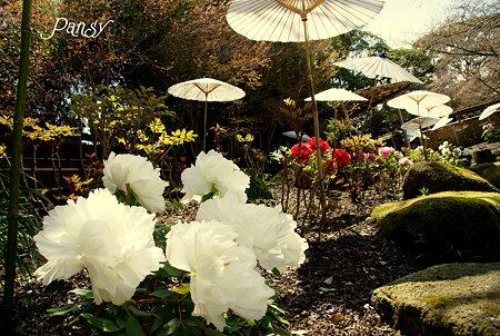 ぼたん庭園にて・・5