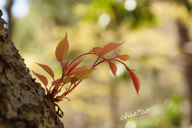 三渓園~春~-204