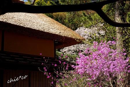 三渓園~春~-209