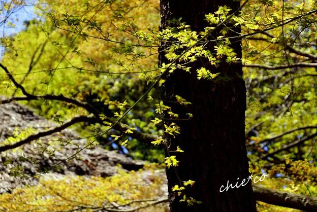 三渓園~春~-211