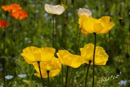 くりはま花の国-048