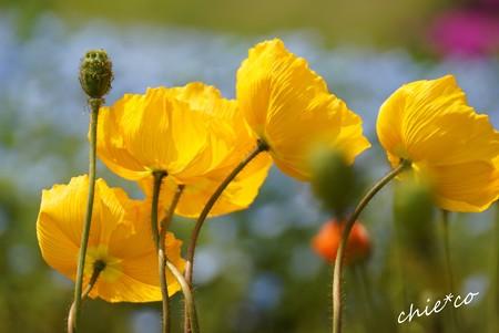 くりはま花の国-105