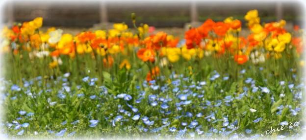 くりはま花の国-078