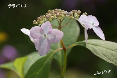 鎌倉長谷-017