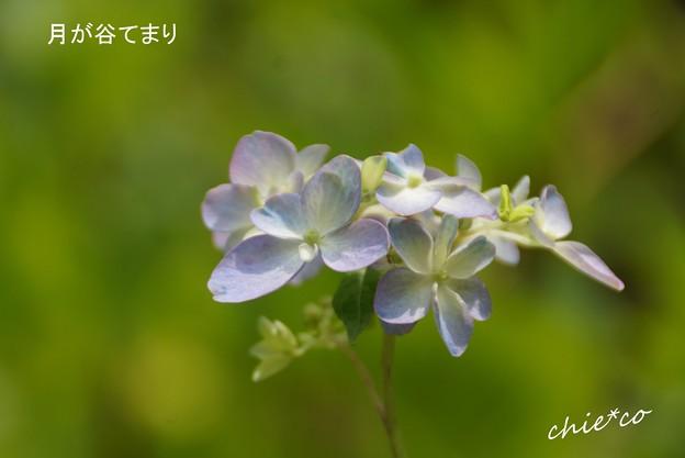 鎌倉長谷-024