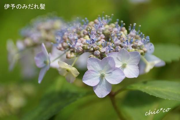 鎌倉長谷-031